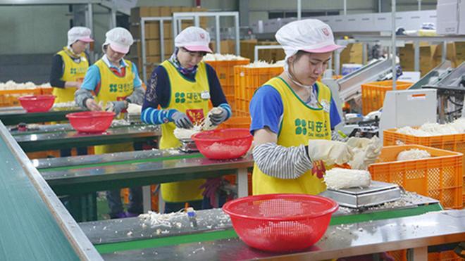 Văn bản quy phạm pháp luật mới ban hành về lĩnh vực hoạt động dịch vụ đưa người lao động đi làm việc ở nước ngoài theo hợp đồng
